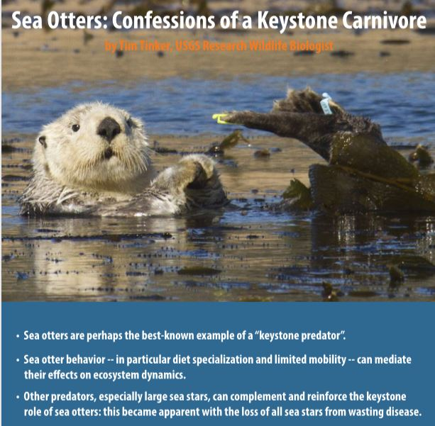 sea otters talk